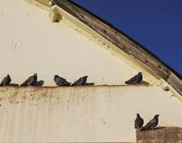 A few wild pigeons sit under the roof of the hangar. A sunny winter day Royalty Free Stock Photos