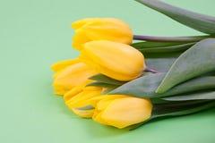 Few yellow tulips Stock Photos