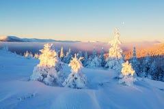 Few zielenieją drzewa w magicznych płatkach śniegu Zdjęcia Stock
