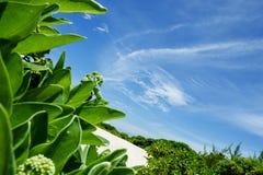 feydhoo finolhu海滩-马尔代夫 免版税库存图片