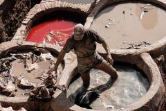 Fez, марокканськая старая кожаная дубильня с деятельностью человека стоковые изображения