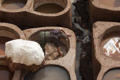 """FEZ MAROCKO †""""FEBRUARI 20, 2017: Man arbete på den berömda Chouara garveriet i medinaen av Fez, Marocko Arkivbild"""