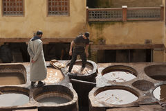 FEZ, MOROCCO - FEBRUARY 20, 2017: Men working within the paint holes at the famous Chouara Tannery in the medina of Fez. Royalty Free Stock Photography