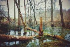 A fFllen Tree royalty free stock image
