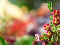 Ffloral Hintergrund Stockfotos