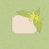 Quadro da flor do Ylang-ylang ilustração do vetor