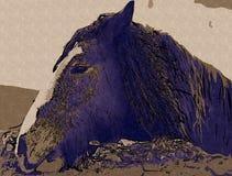 Freehand horse head art design illustration abstract drawing. Ffreehand horse head art design design illustration good for any design. A very funny illustration Stock Images