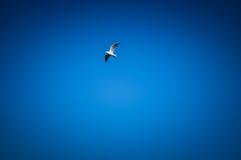 Fågel i den blåa himlen Fotografering för Bildbyråer