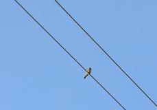 Fågel på en tråd Arkivbild