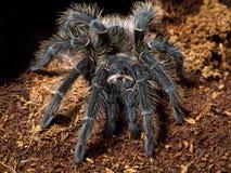 fågel som äter spindeln Arkivfoto