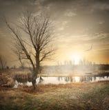 Fågel över höstfloden Fotografering för Bildbyråer