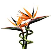 fågelblommaparadis Royaltyfri Foto