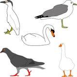 fågelsamlingsillustration Fotografering för Bildbyråer