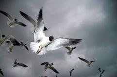fåglar Royaltyfri Bild