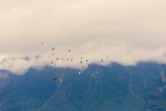 Fåglar i moln för högt berg Royaltyfri Fotografi