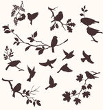 Fåglar och ris Arkivfoton