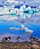 Fåglar på kusten av lagun Arkivfoton