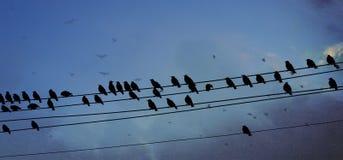 Fåglar på tråd Royaltyfri Bild
