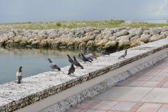 Fåglar på väggen Royaltyfria Foton