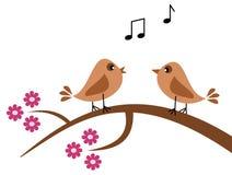Fåglar på våren som sjunger Royaltyfri Bild
