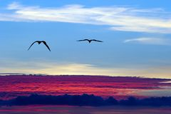 Fåglar som flyger ovanför molnkonturn Arkivbild