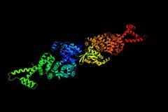 FH3 diáfano, um domínio do formin Formins é um grupo de proteínas fotografia de stock royalty free