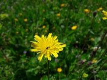 Fhotography del flyıng de la flor del beatfull de la abeja Foto de archivo