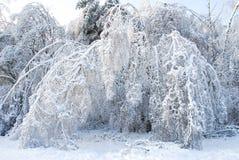 Fiaba congelata Fotografia Stock