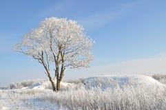 Fiaba di inverno Fotografia Stock