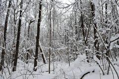 Fiaba di inverno nella foresta Fotografia Stock