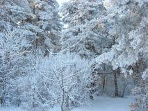 Fiaba nella foresta di inverno fotografia stock libera da diritti