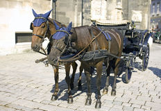 Fiacre vehicle horse austria vein Royalty Free Stock Photos