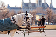 Fiaker carriage in Vienna, Austria Stock Photography
