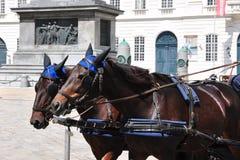 Fiaker at Hofburg Palace in Vienna Stock Image