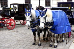 Fiaker horse carriage Stock Images