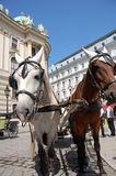 Fiaker in Vienna. Famous horse-drawn vehicle in Vienna (Austria Stock Images