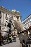 Fiaker in Vienna. Famous horse-drawn vehicle in Vienna (Austria Stock Photo