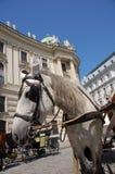 Fiaker in Vienna Stock Photo