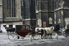 Fiaker in Vienna. Fiaker horses in Vienna Austria Stock Image