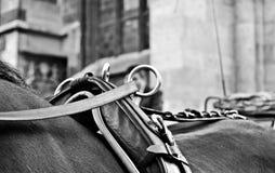 Fiaker in Wien Royalty-vrije Stock Foto