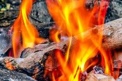 Fiamma dorata della natura con legname Fotografia Stock