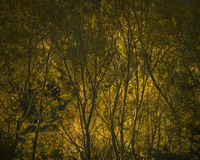 Fiammata di sole al tramonto Fotografie Stock