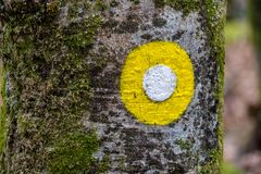 Fiammata gialla sull'albero fotografia stock libera da diritti
