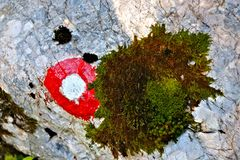 Fiammata rossa su roccia muscosa fotografia stock libera da diritti