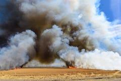 Fiamme che bruciano il campo di stoppie del grano Fotografia Stock