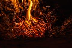 Fiamme del fuoco alla notte scura Immagine Stock Libera da Diritti