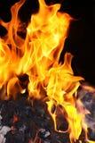 Fiamme del fuoco del carbone Fotografia Stock