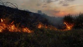 Fiamme e fumo di incendio violento in natura archivi video