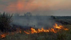 Fiamme e fumo di incendio violento in natura stock footage