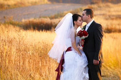 Fiance kisses bride's forehead somewhere on the golden field Royalty Free Stock Images